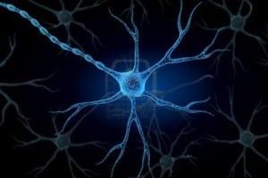1-neuron