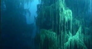 descoperire-incredibila-in-largul-coastelor-statului-alabama-oamenii-de-stiinta-au-ramas-uluiti-217189