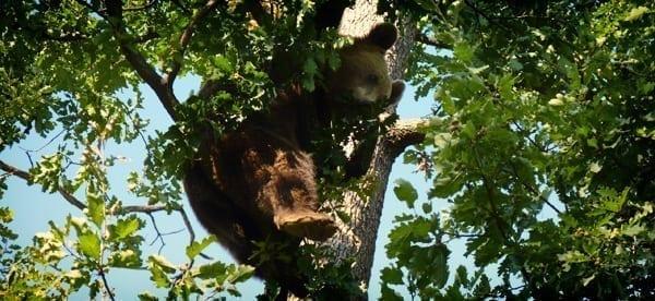Sanctuar-Zarnesti-ursi