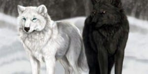cei 2 lupi