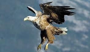 vultulr