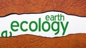 Festivalul Internaţional al Filmului Ecologic