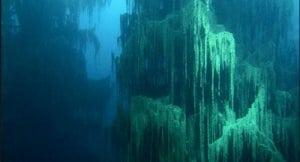 padurea subacvatica