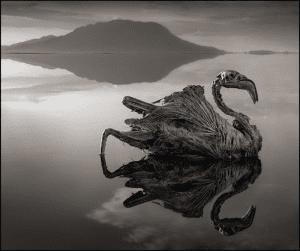 Lacul ucigas 1