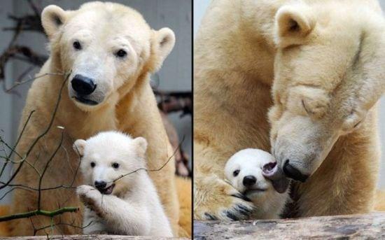 motherhood_animals_11