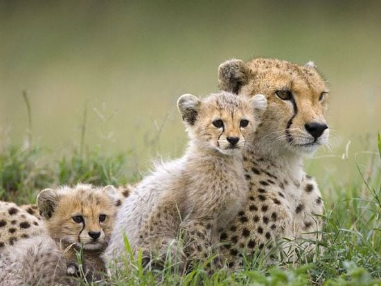 motherhood_animals_14