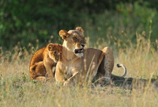 motherhood_animals_15