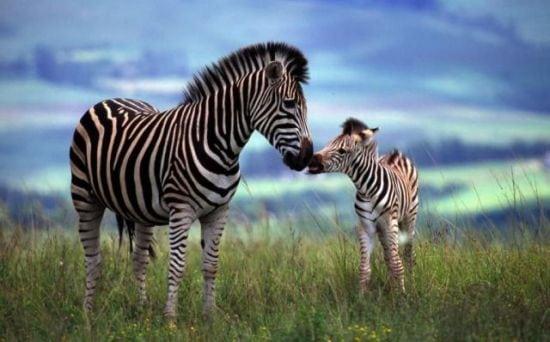 motherhood_animals_16