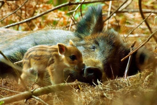 motherhood_animals_18