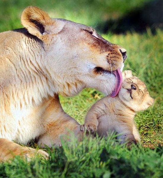 motherhood_animals_19
