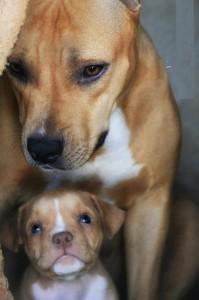 motherhood_animals_21