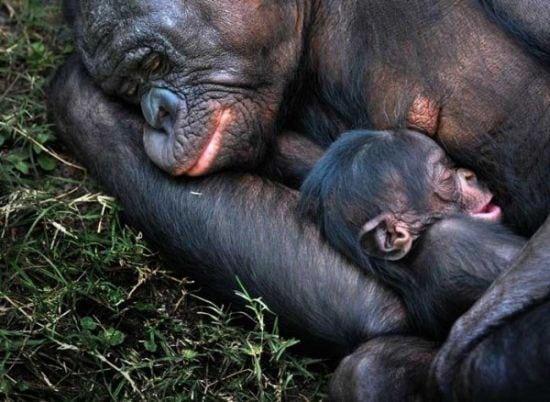 motherhood_animals_3