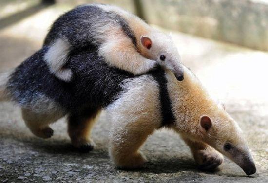 motherhood_animals_4