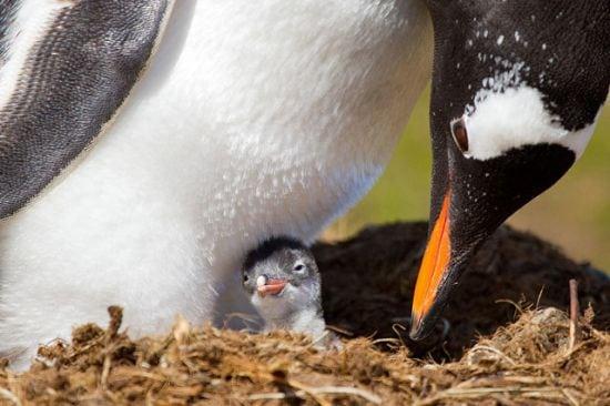 motherhood_animals_5