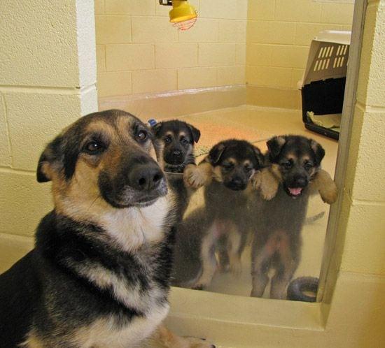motherhood_animals_7