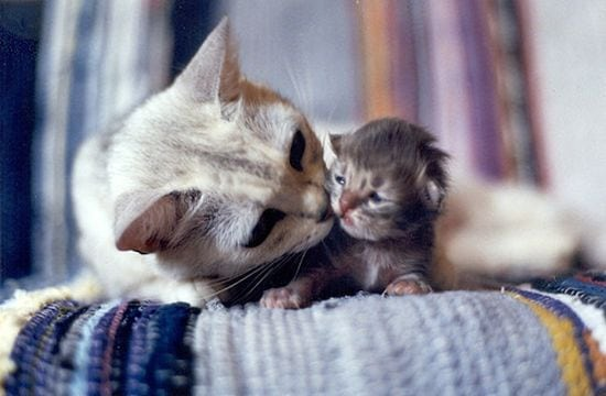motherhood_animals_8