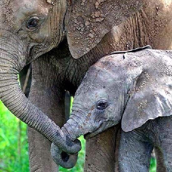 motherhood_animals_9