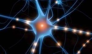 neuron-oglinda