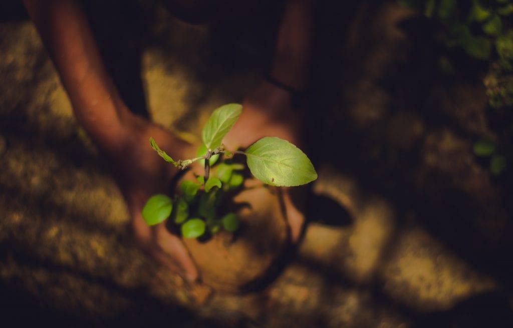 plantarea-unui-pom-fructifer
