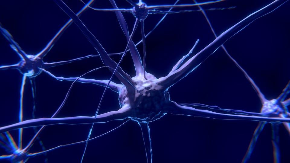 Neuronii - oglindă