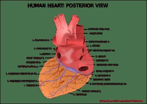 O inimă artificială