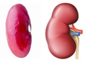 fasolea-se-aseamana-rinichiului