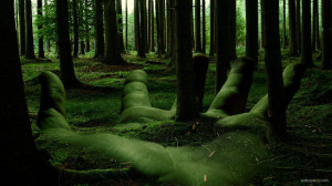 forest-hd-wallpapers-2012
