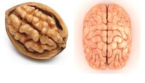nuca-se-aseamana-creierului