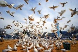 Afghanistan Observes 2007 International Peace Day