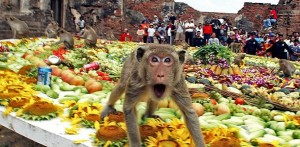 THAILAND-Monkey-Buffet-610x300
