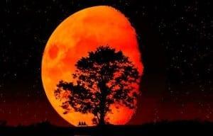 luna-rosie-3