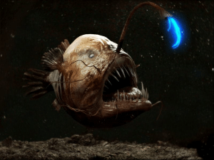 pestele pescar 1