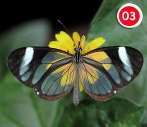 03-fluture