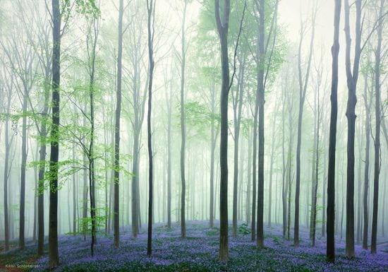 Pădurea Albastră