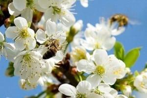 doua-albine-