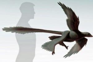 Changyuraptor-yangi