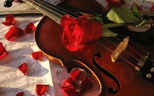 vioara_si-_trandafiri