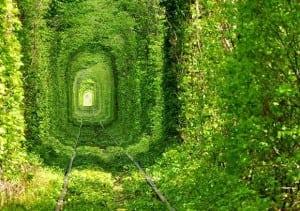 Beautiful-Train-Tree-Tunnel-1-580x4351