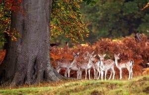 cute-deer-res_696848
