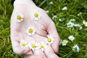 daisy smile sm