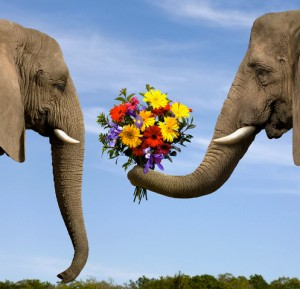 Elephant Giving Bouquet --- Image by © Dianna Sarto/Corbis