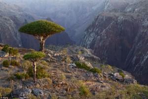 FRUMUSEȚILE PĂMÂTULUI: Socotra, tărâmul ascus