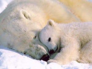 urs alb