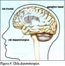 Caile dopaminergice