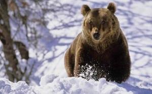 Cultul Ursului