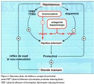 Dopamina 6