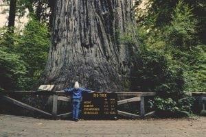 Arborele Sequoia