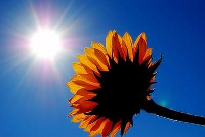 protecția solară