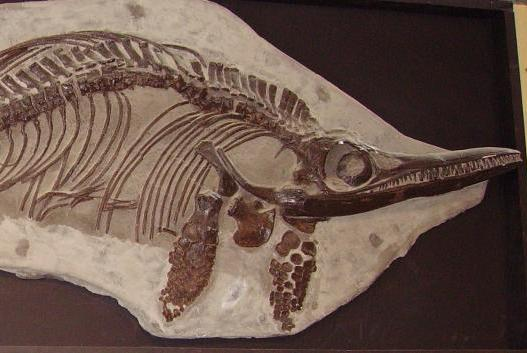 Fossils-of-large-ocean-reptile-discovered-on-the-coast-of-Scotland