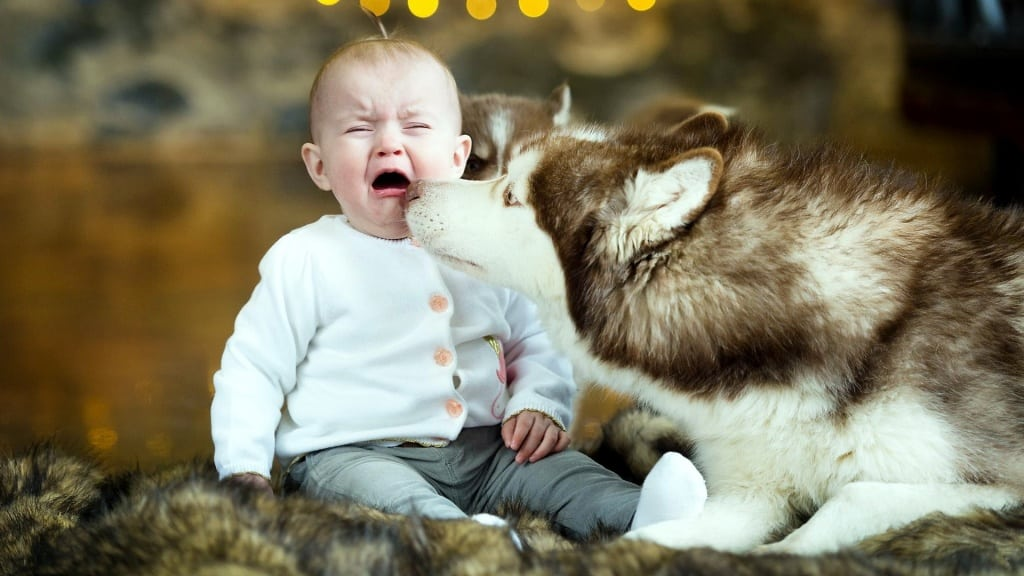crying_baby_and_dog-1024x576